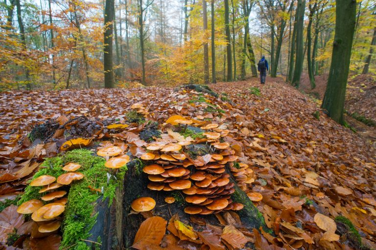 Boswandelingen: dit zijn 3 hele fijne routes voor in de herfst