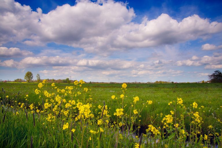 De 6 leukste plantenweetjes voor april