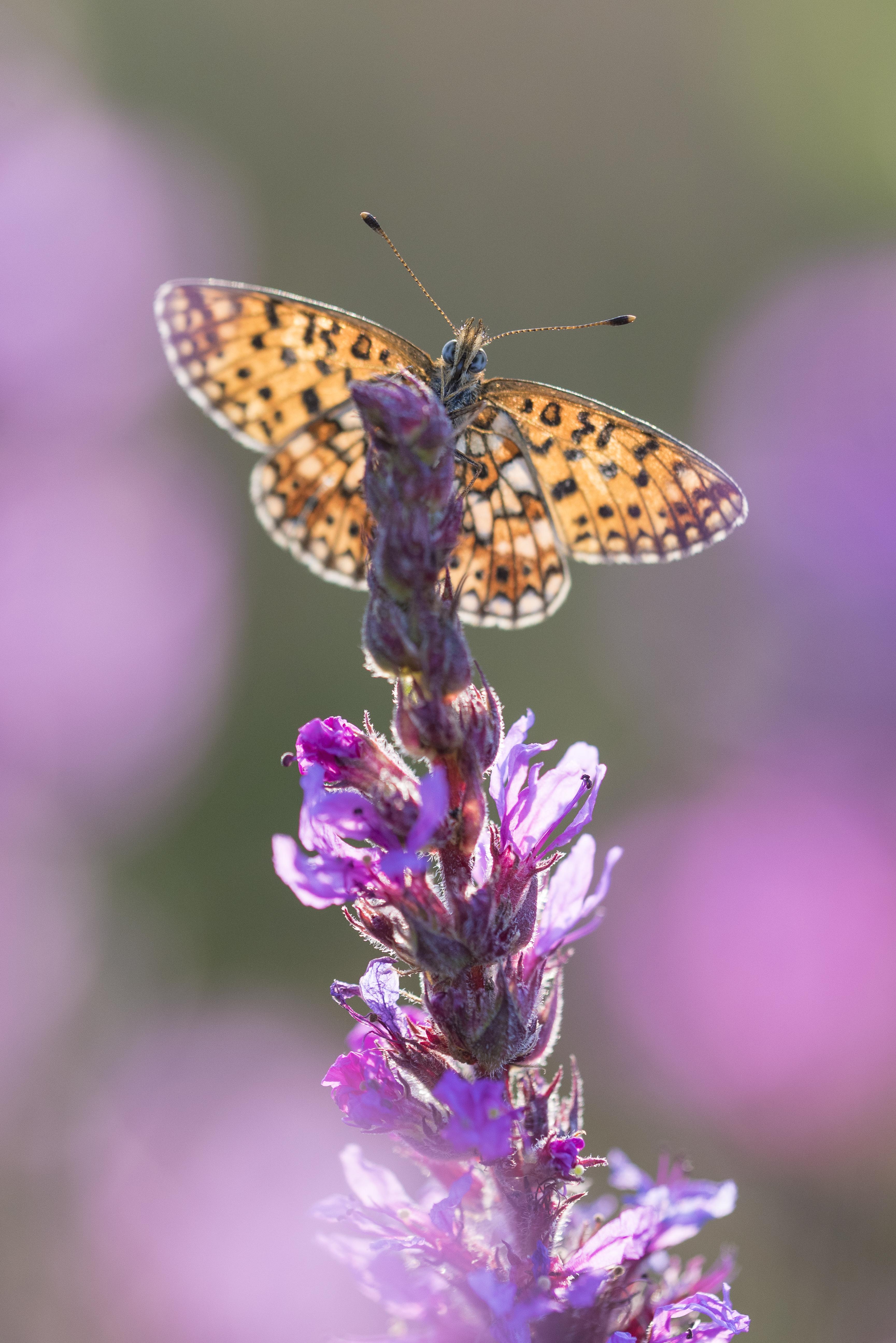 Vlinder uit Macrofotografie, de kunst van Close-ups