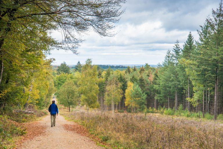 Nieuwe natuurroute: de kracht van bomen in het Amerongse Bos