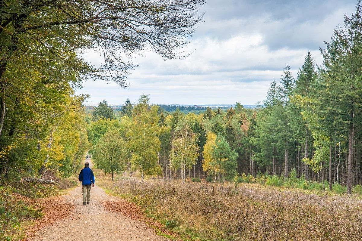 Nieuwe wandelroute: Amerongse Bos