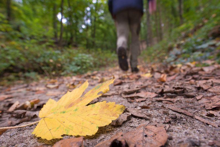 Onverhard wandelen: Wandelnet brengt een ode aan het zandpad
