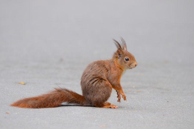 eric de man eekhoorn