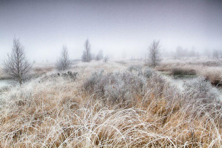 Een landschap met rijp fotograferen