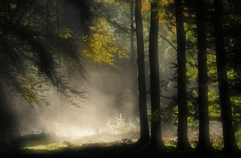 De perfecte zomernacht in het bos