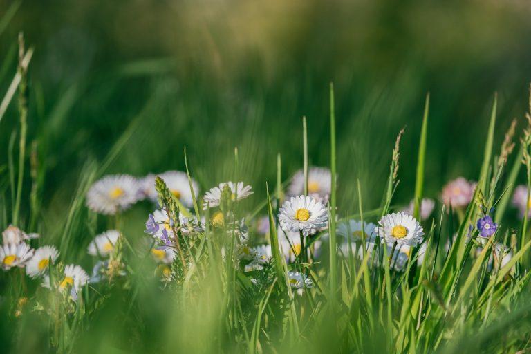 Gras in je tuin? Laat het juist groeien