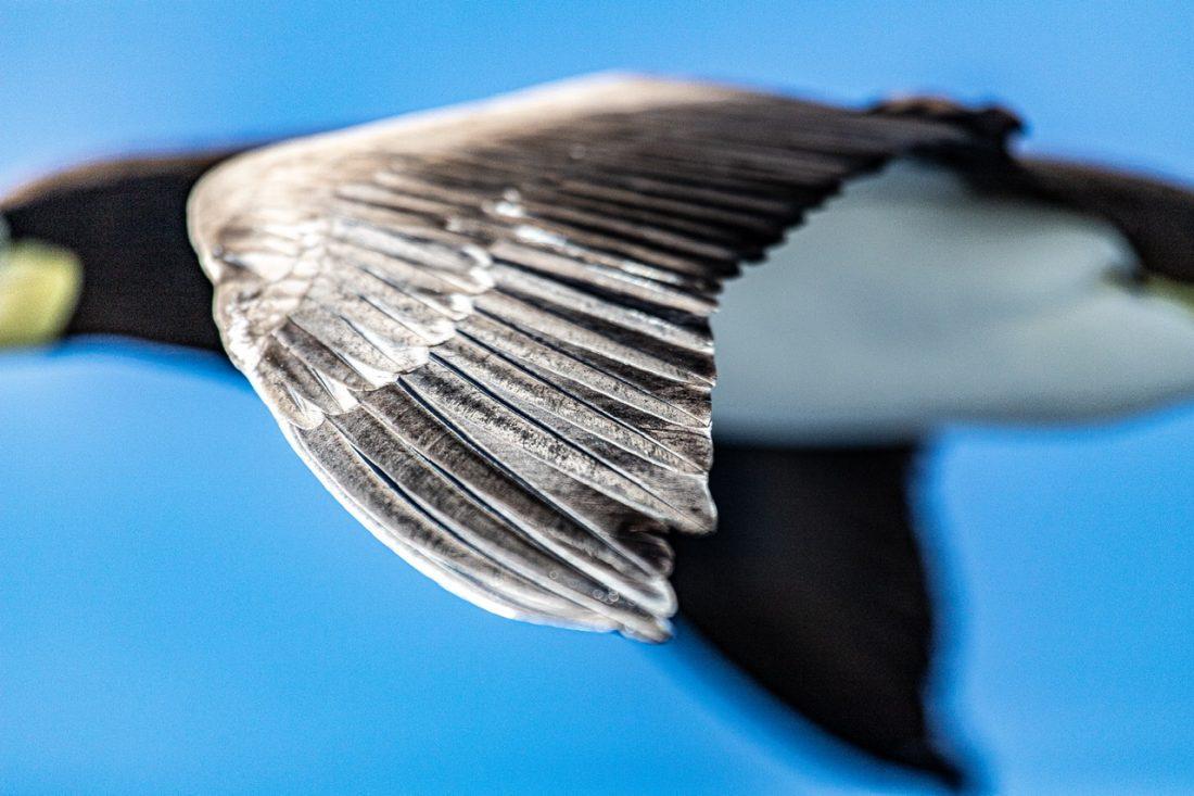 Op het puntje van mijn… vleugel