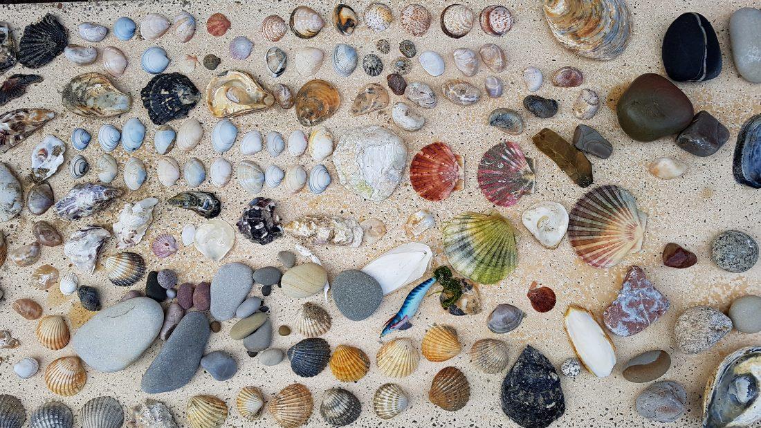 Art of nature schelpen