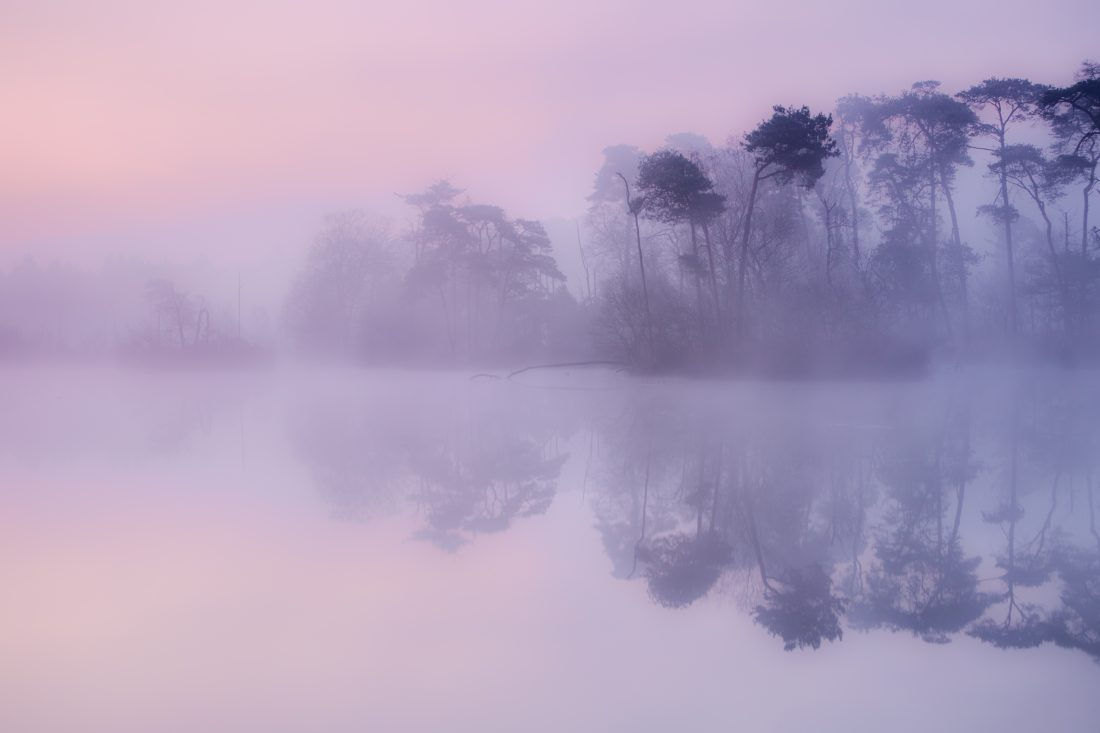 purple morning