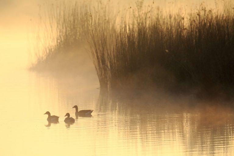 Spirit of nature: gebruik je zintuigen als voelsprieten