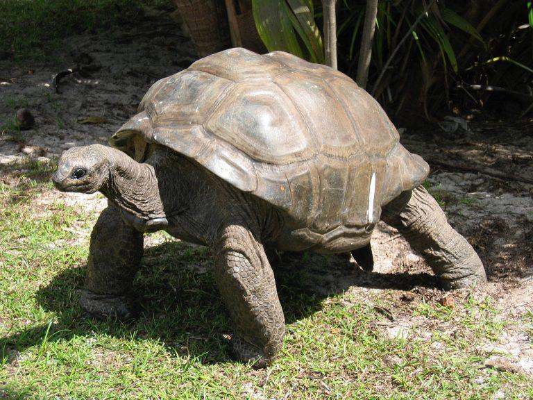De 10 oudste dieren van de wereld