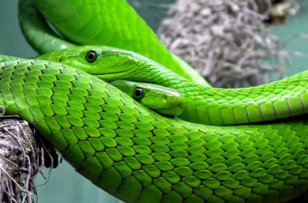 De 10 gevaarlijkste dieren