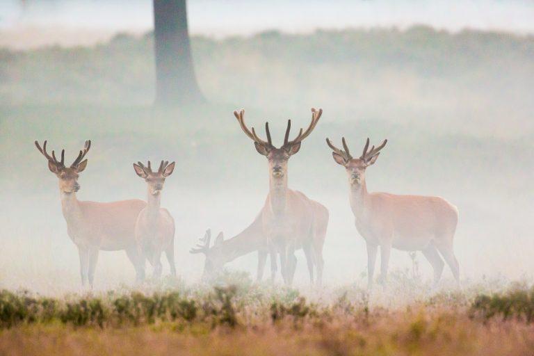 'Jagers zijn watjes die niet tegen druk kunnen'