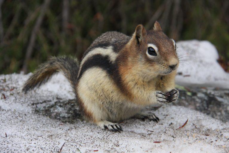 Neemt de spiermassa af tijdens de winterslaap?