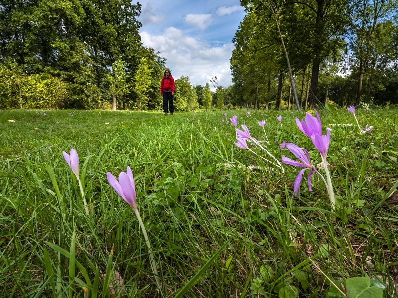 Nieuwe wandelroute: Plateaux-Hageven