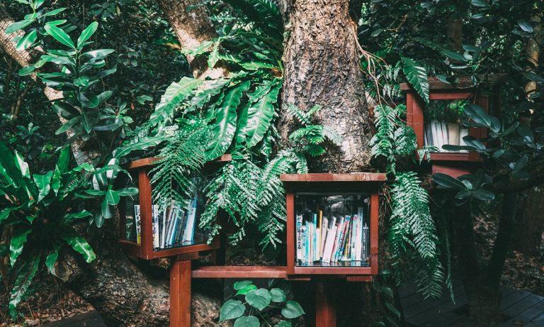 Dit zijn de 4 beste natuurboeken van 2019 (volgens Roots)