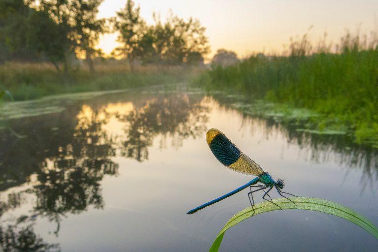 Mini-masterclass van Edwin Giesbers: libellenfotografie