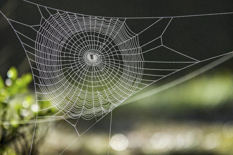 In de ban van… spinnen