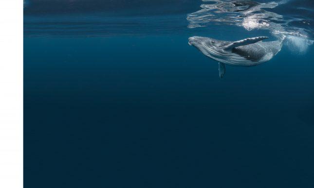 coronastilte onder water