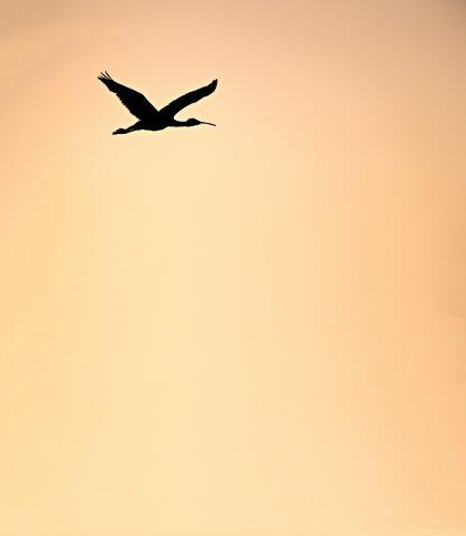 hoe hoog vliegen vogels