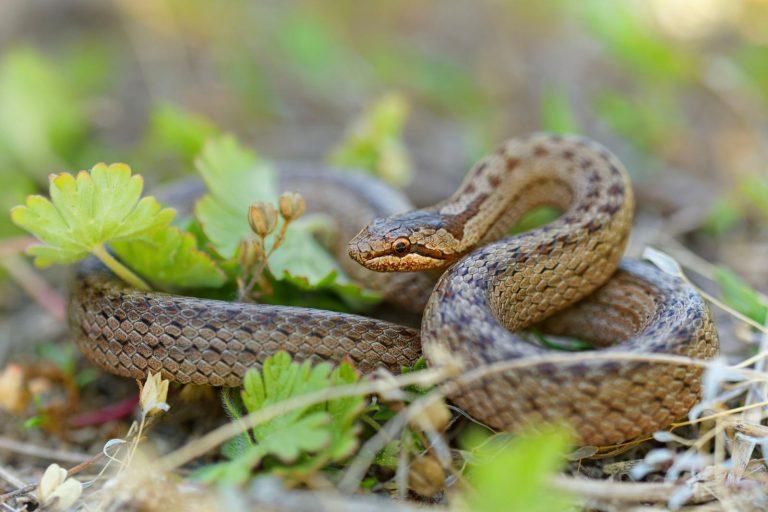 In de ban van slangen