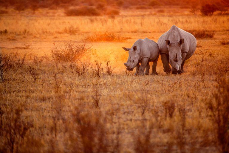 Kunnen dieren natuurrampen voorspellen?