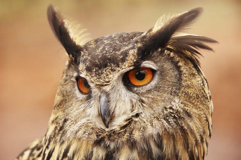 OORZAKEN: 7 bijzondere weetjes over dierenoren