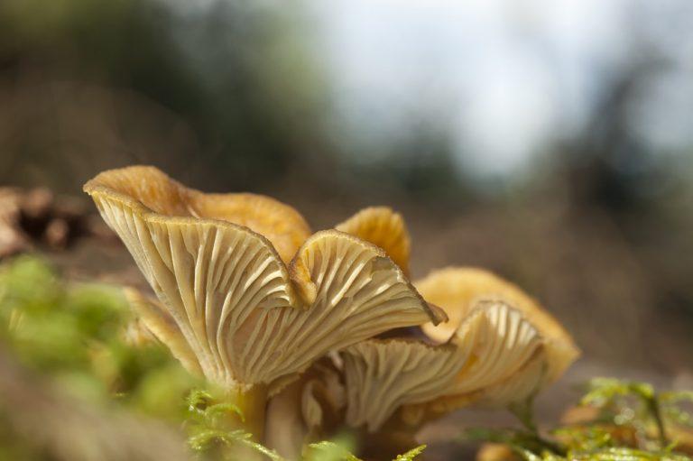 Lezersaanbieding: speur met Roots naar paddenstoelen