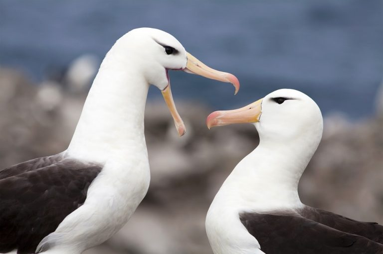 Kunnen vogels ruiken?
