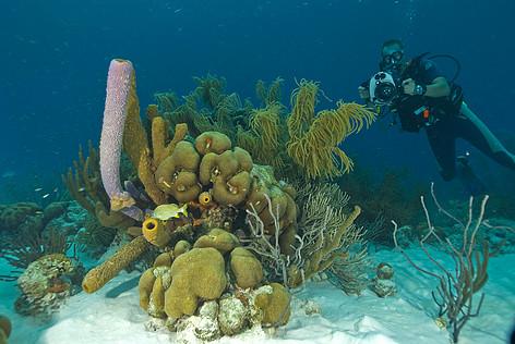 Voorlopig geen feestpier op koraalriffen van Bonaire