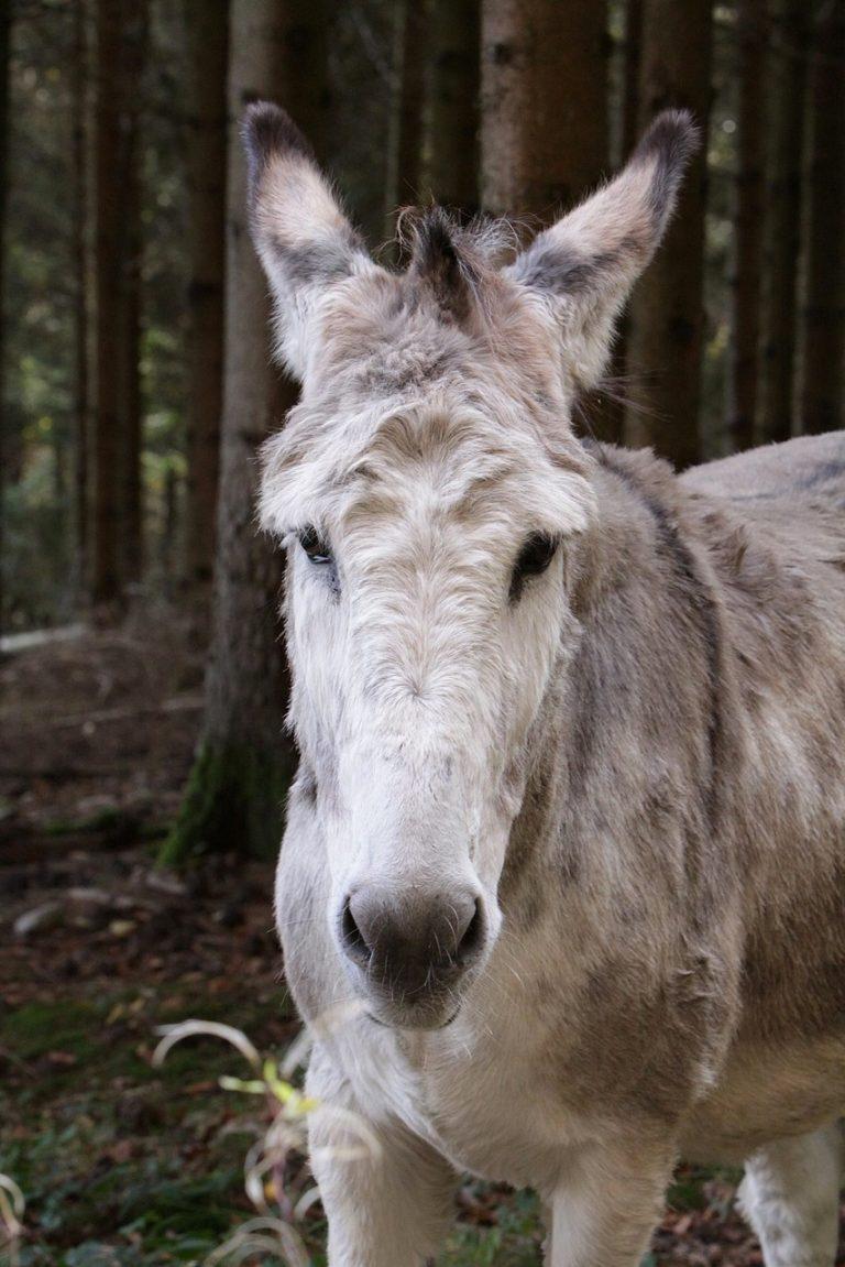 Over melancholische ezels en vrouwelijke brem