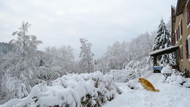 Sneeuw: genieten en soms een beetje afzien