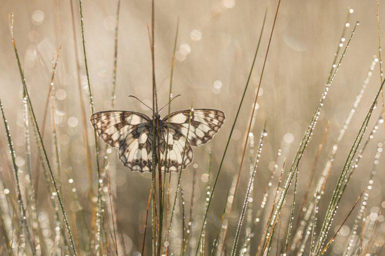 Fototips van Johannes Klapwijk
