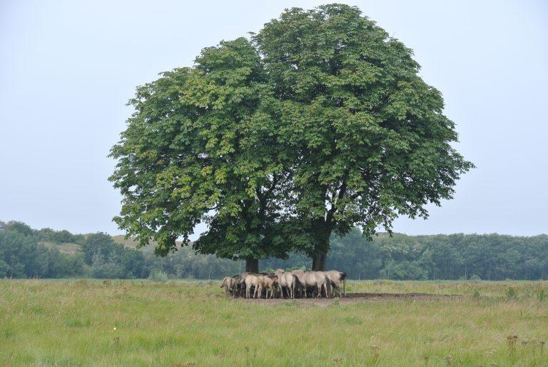 Ook bomen kunnen slapen