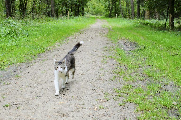 Wandelblog: met een kat op pad in Twente