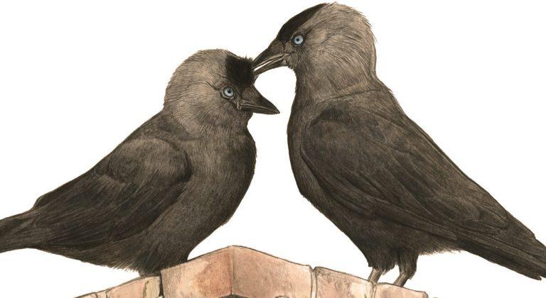 Vogels, het zijn net mensen