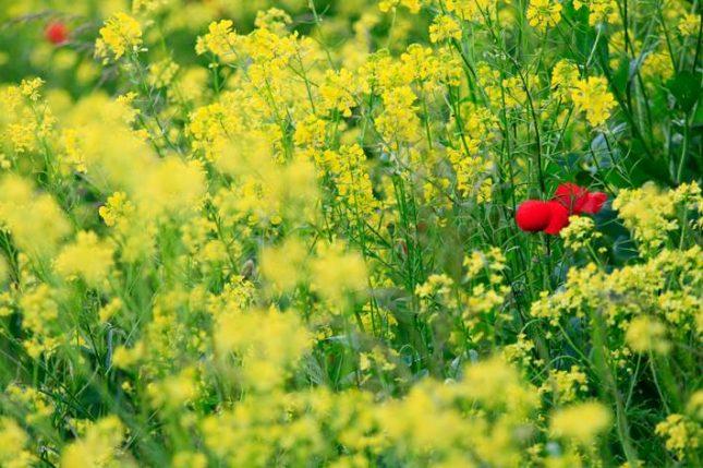 plantenblindheid