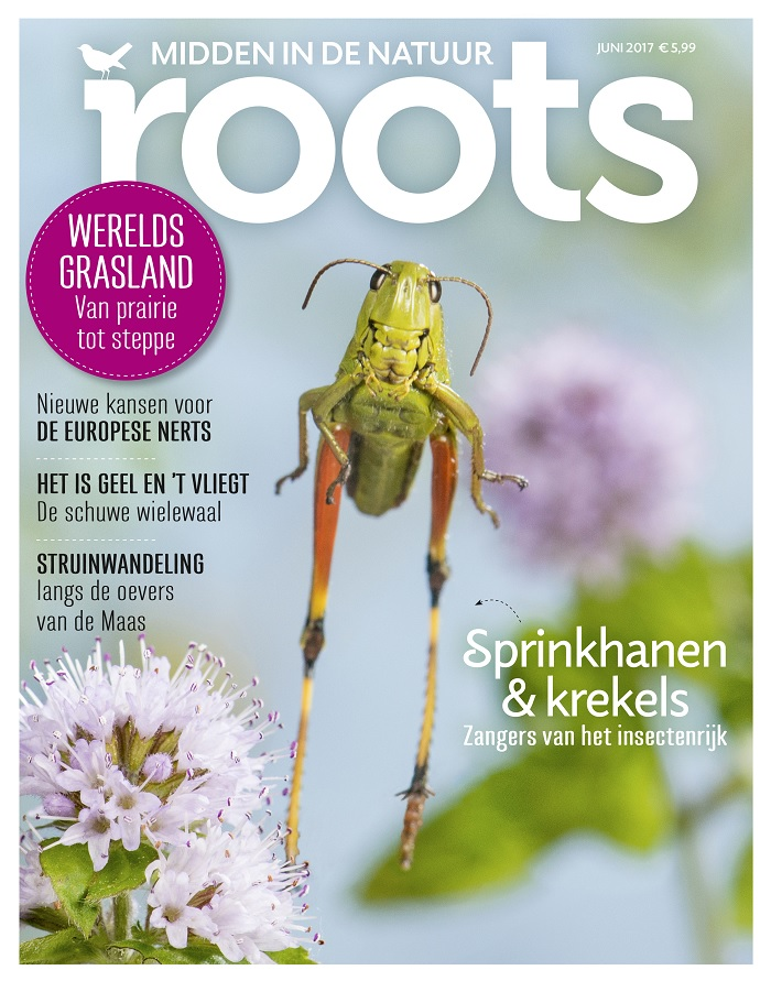 klein Roots editie 6
