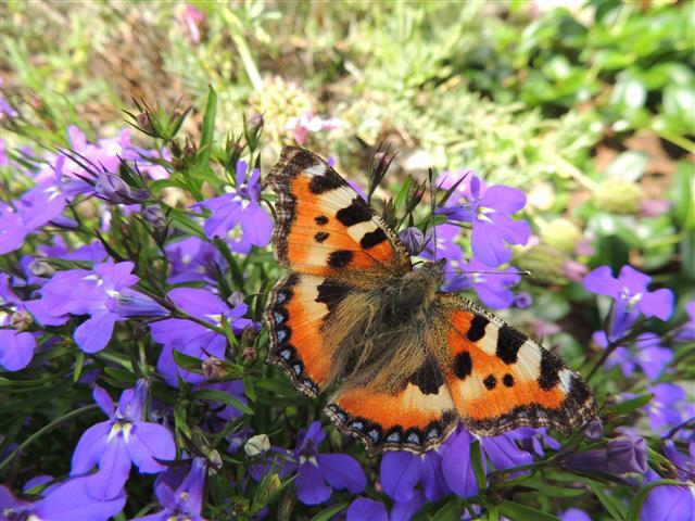 Zomer vol vlinders