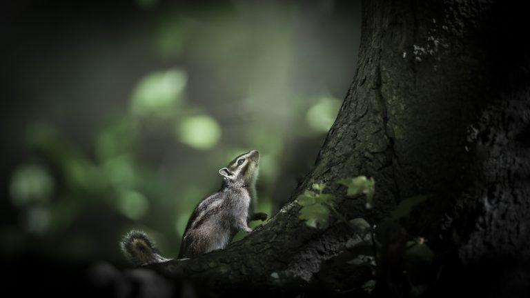 Een siberische grondeekhoorn in sprookjessfeer