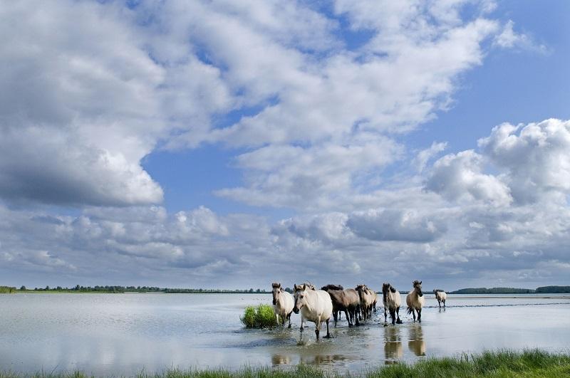 Nieuwe route: wandelen bij nationaal park Lauwersmeer