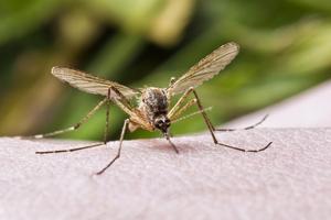 Een euro voor een mug