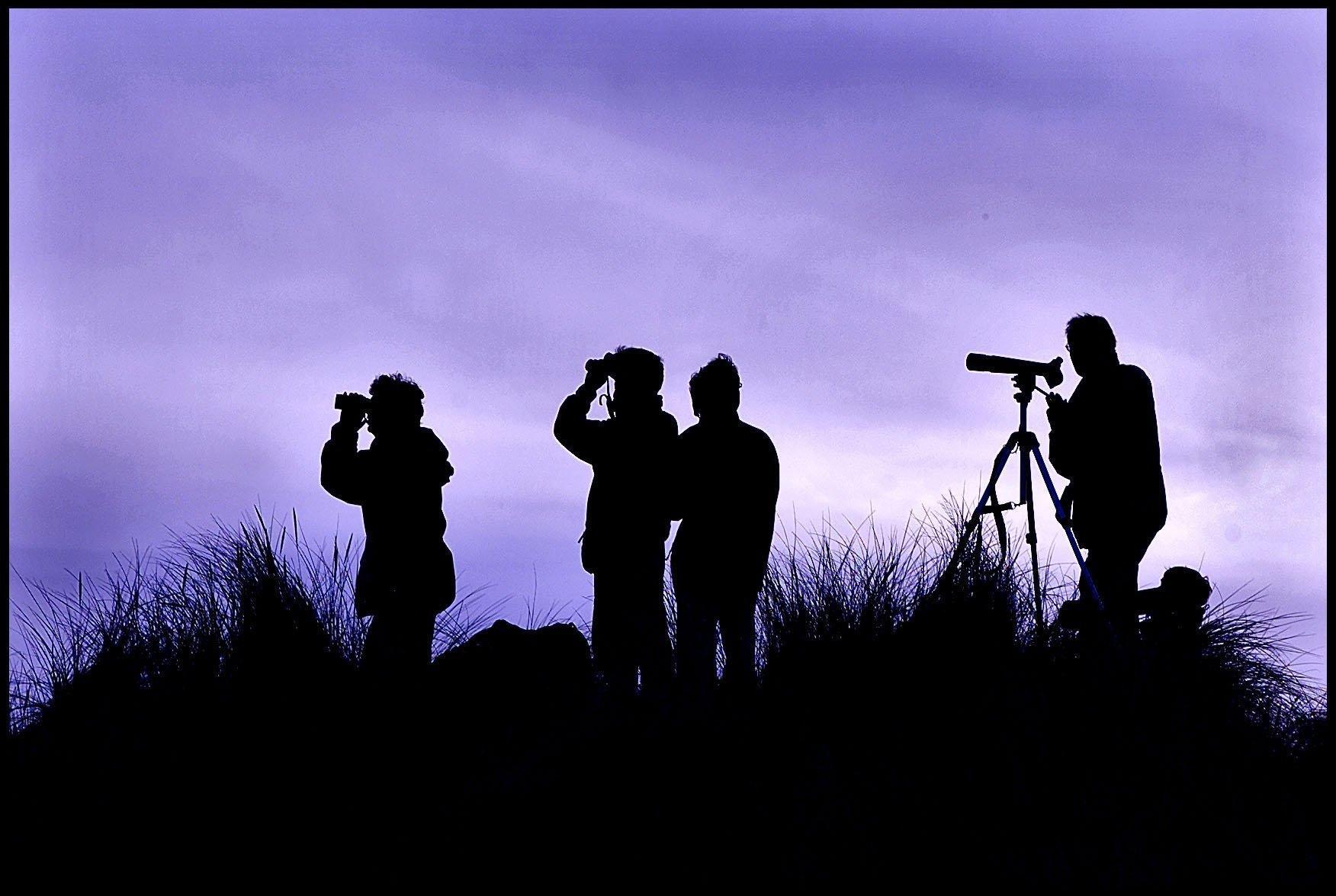 Trekvogels op Ameland