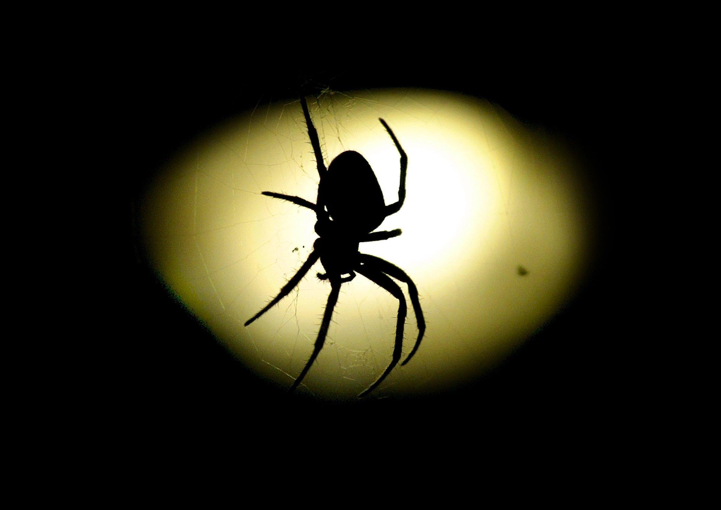 Slechte zomer levert kleine spinnen op