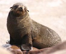 Zeehonden: kijken niet aankomen