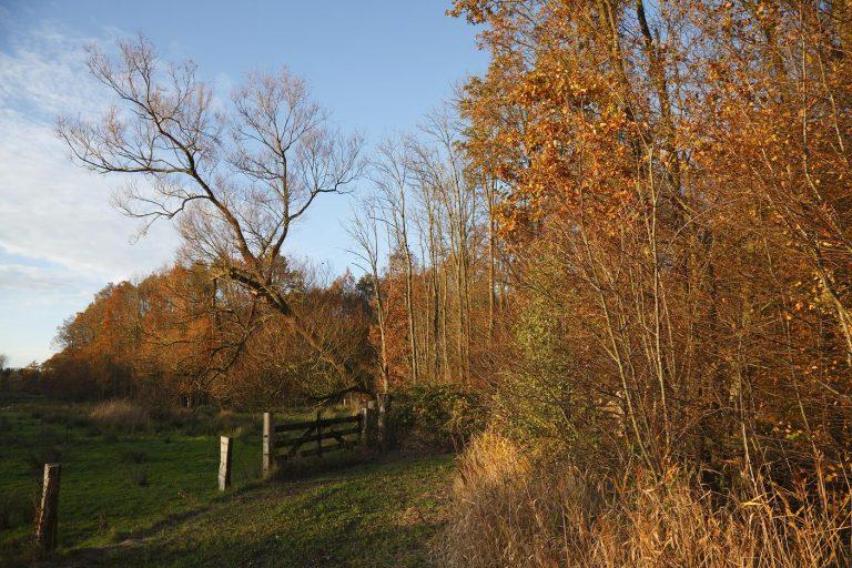 Herfstwandelen langs herfstbloemen
