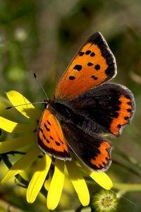 Mooie nazomer zorgt voor mooie vlinders