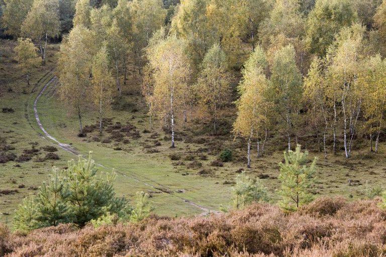 Gratis: de mooiste herfstwandelingen van Roots