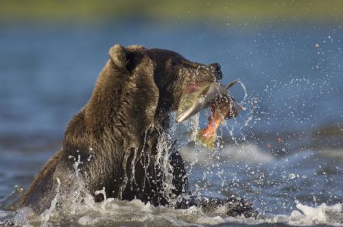 Tijgers en beren in je achtertuin