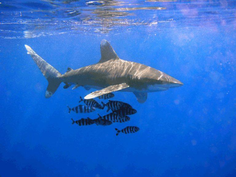 Help de haaien